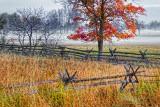 Autumn Tree & Fence 20140929