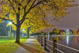 Autumn Trees At Night 20140930