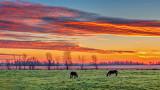Equine Sunrise 20141006