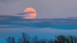 Clouded Moonrise P1000623