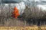 Lone Autumn Tree P1000472