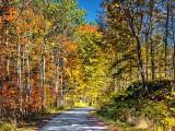 Autumn Back Road P1010003