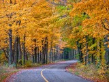 Autumn Back Road P1010219