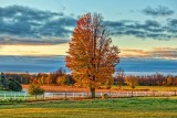 Autumn Tree At Sunrise P1000799-801