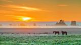 Equine Pals At Sunrise P1010075-7