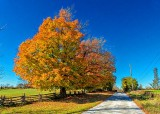 Autumn Back Road P1000979