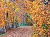 Autumn Back Road P1010592