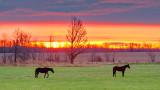 Equine Pals At Sunrise 20141031