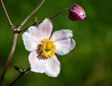 Pink & Yellow Flower DSCF00063
