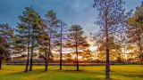 Sunrise Pines 20141101
