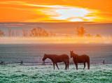 Equine Pals At Sunrise P1010078-80