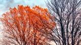 Autumn Tree In Sunrise Glow P1020160