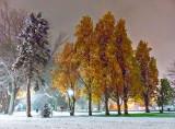 Snowy Confederation Park 20141117