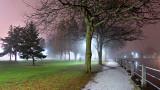Foggy Confederation Park At Night P1030092.98.103