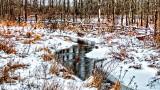 Wintry Hutton Creek 20141213