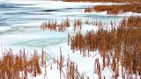 Otter Creek Grass, Snow & Ice 20141216