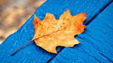 Docked Leaf 20141227