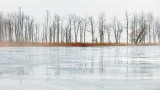Trees In Fog P1040679