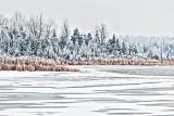 Frosty Wonderland P1040579