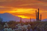 Desert Sunset 76016-9