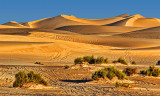 Imperial Sand Dunes 26531