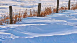 Fence & Drifts P1060547-9