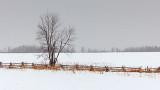 Winter Tree & Rail Fence P1060804-6