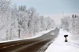 Spring Snow P1100035