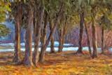 Stand Of Pines Art DSCF00935