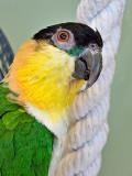 Parrot Closeup P1110548