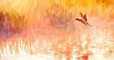 Duck Taking Flight In Sunrise Mist 'Art' P1130303