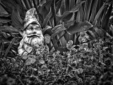 Garden Gnome P1130445-7