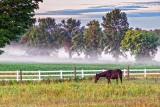 Horse In Pasture P1150477