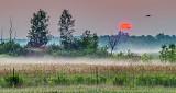 Red Sun Rising P1150667-9