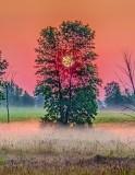 Sun Rising Through A Tree P1150713-5