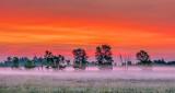 Trees In Misty Sunrise P1150725-7