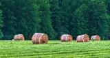 Bales In A Field P1150794-6
