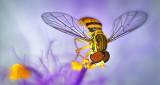 Ahh Sweet Nectar P1150866