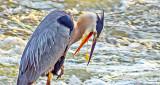 Barfing Bird DSCF4230