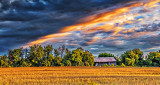 Golden Field At Sunrise P1170521