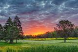 Sunrise Glow DSCF4538-40