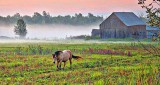 Equine Pal In Misty Sunrise 45662