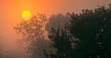 Trees In Foggy Sunrise 45777-9