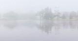 Turtle Island Trees In Fog 45842