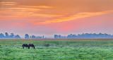 Equine Pals At Sunrise 46020-2