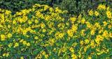Roadside Wildflowers P1190043-5
