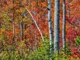 Autumn Trees DSCF4947