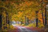 Autumn Back Road P1200254-6