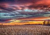 Cornfield At Sunrise DSCF5056-8