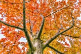Up An Autumn Tree 46207-9